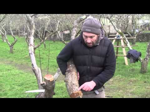 Pruning Old Fruit Trees - Reinvigorating Old Trees