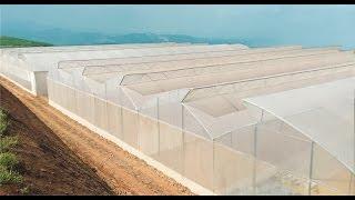 ứng dụng công nghệ nhà màng và hệ thống tưới nhỏ giọt trong sản xuất nông nghiệp