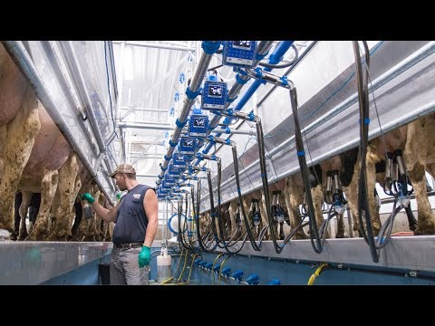Wisconsin Milking Parlor - Dairymaster Swing 12
