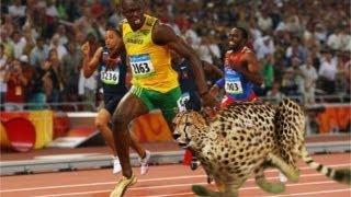 Usain Bolt Races Cheetah on Track - AMAZING