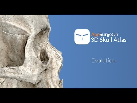 3D Skull Atlas APK Cover