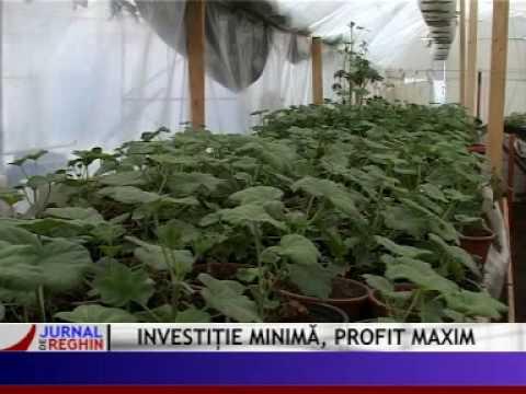 investitie minima profit maxim.mpg