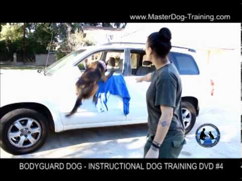 Bodyguard Dog Training - Instructional Dog Training DVD #4 Image 1