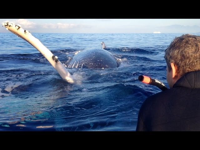 Most Epic Maui Whale Watch EVER - part 2