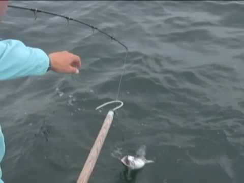 Orange Beach Fishing - Inshore and Neashore