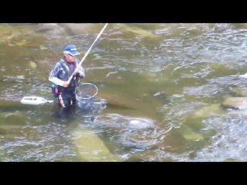 River Fishing in Japan!