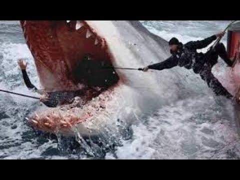 หนังใหม่ 2019 The Meg ฉลามยักษ์อสูรใต้ทะเล HD หนังใหม่ 2019 พากษ์ไทยเต็มเรื่อง (กดติดตามด้วยนะคะ)