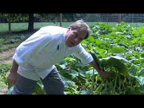 Chef Jacques' L'Auberge Chez Francois VLOG Jacques' Garden August 3, 2012