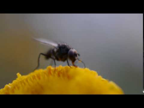Experiment with Panasonic 30mm macro