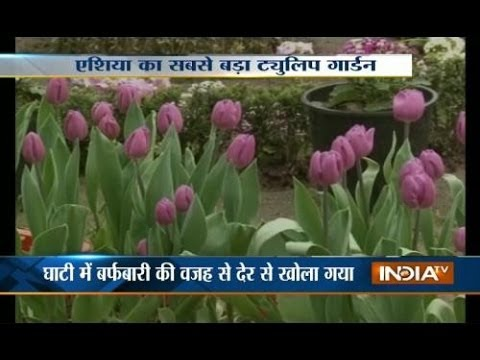 Srinagar's Tulip Garden thrown open to visitors