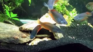 """""""Around the World"""" Update on My Fish Room 2/27/17"""