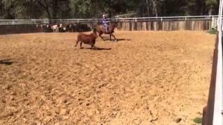 Mercedes- Jared Lesh cowhorses