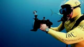 IWC Aquatimer Chronograph Edition SHARKS & Michael MULLER