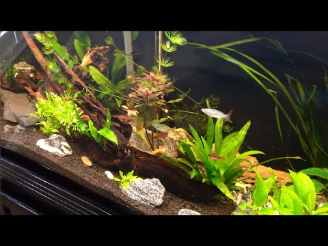 Planted tank update. algae bloom and UV sterilizer