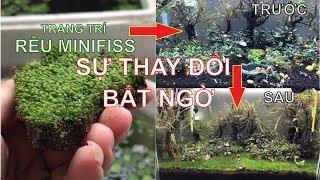 Hướng dẫn trang trí bể cá cực dễ, nhanh và đẹp bằng rêu Mini Fiss