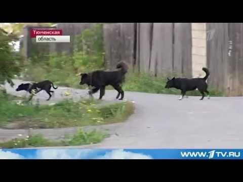 Чупакабра в Тюмени и Челябинске
