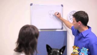 Geriatric and Senior Pet care - Fitzroy Vet Hospital