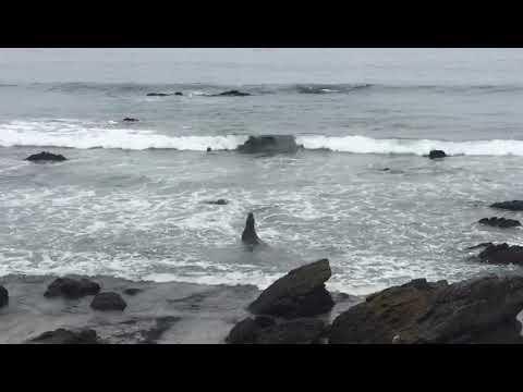 01.06.2019 Elefant Seals