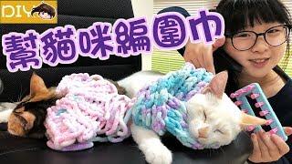 【DIY】幫貓咪做圍巾和披肩,女孩手工針織基本組,後面有貓咪