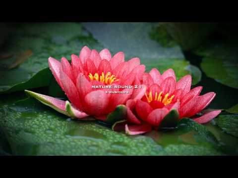 Nature Sound 21 - RAIN SOUND / THE MOST RELAXING SOUNDS -