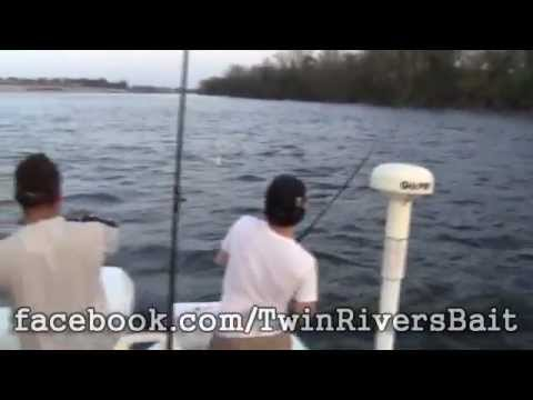 Striper Fishing in Trenton New Jersey, 5th & 6th Fish - TRB