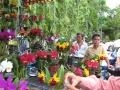 hội thi lan các tỉnh miền tây nam bộ tại Vĩnh Long ngày 2/9/2010