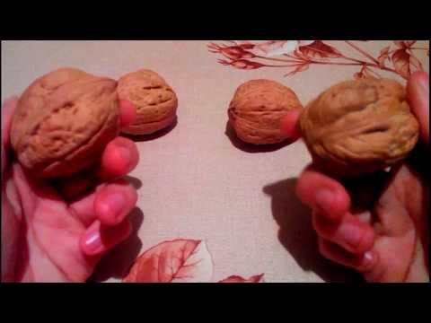 Выращивание грецкого ореха из семян быстрым методом часть 1 530