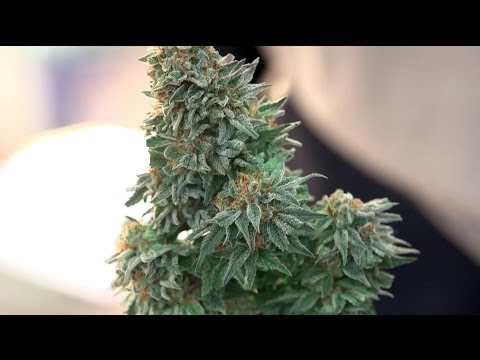 2014 HIGH TIMES Seattle US Cannabis Cup: Saturday Highlights