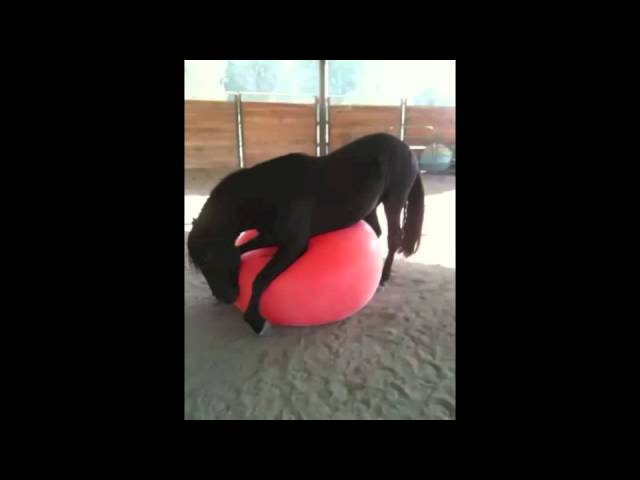 Funny Horse Playing with a Giant Ball