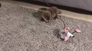 Baby otter 2