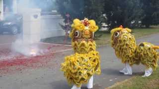 Fire Crackers and Lion Dance to Welcome a Happy Chinese New Year of the Horse 2014 in Malaysia