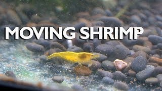 Setting up a QUICK and EASY shrimp tank