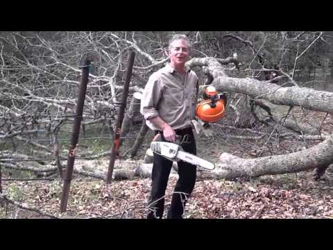 The Sonoma Valley Chainsaw Massacre in Mathis Vineyard