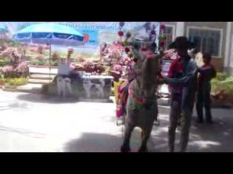 Sex Coyote Horse Phitsanulok In Thailand. .swf video