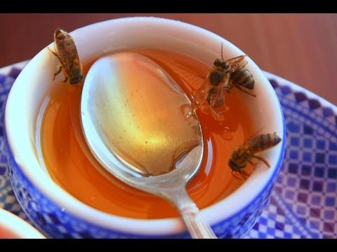 Feeding Bees In The Winter The Easy Way