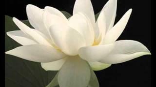 Watch Yanni Secret Vows video