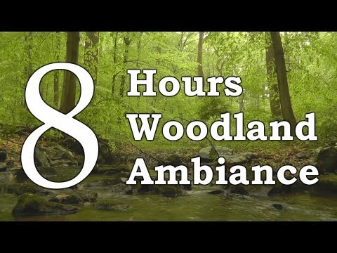 Relaxing Nature Scene #3 8 Hour Sleep version: Woodland Ambience, Birds and Trickling Stream