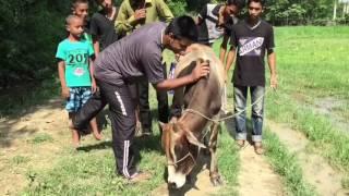 Sylheti funny