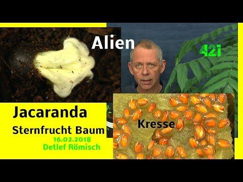 Alien Samen wächst und ein anderer Unbekannter wird befreit im Reich der Pflanzen