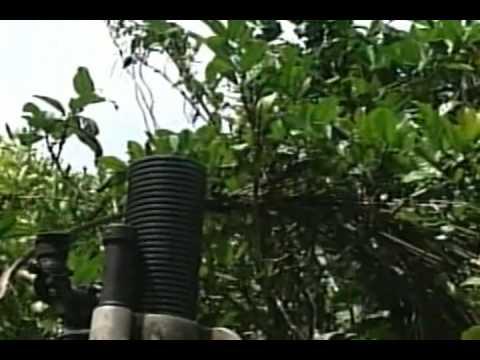 Cotabato By Asin video