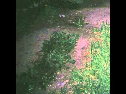 Surrenderdorothy - Theoceanhasneverbeensocold