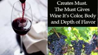 Red Wine Making Basics