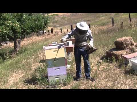 Organic Beekeeping 101 - Video 1 of 38 - Full Course at Organic Life Guru
