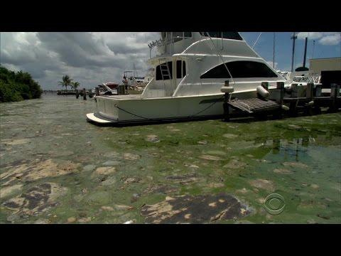 Algae bloom shutting down Florida beaches