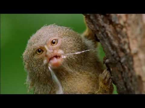 Natural World - Clever Monkeys (Part 1/6)