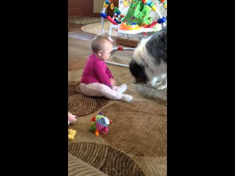 Australian shepherd and 9 month old baby play catch ;)