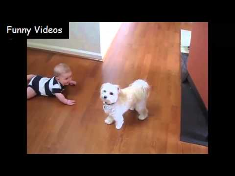 Babies And Dogs - Funny Videos 2015