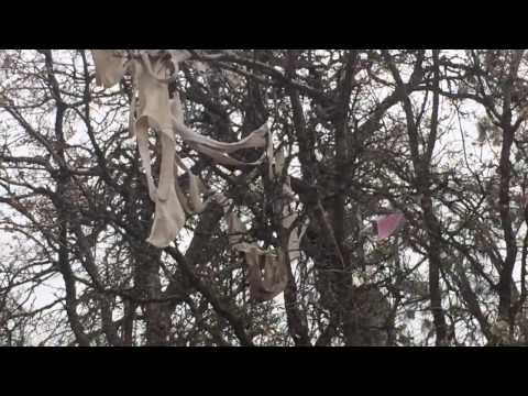 Bras And Panties On Trees