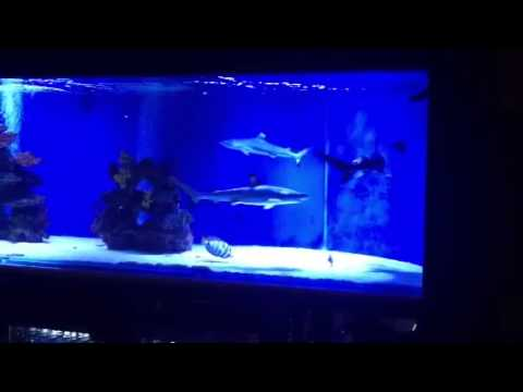Baby In A Fish Tank Sharks