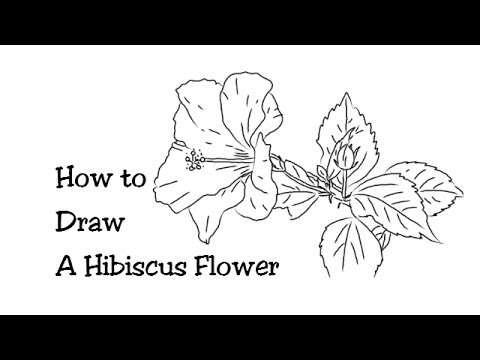 How To Draw A Beautiful Hibiscus Flower Youtube